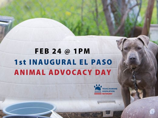El Paso's Inaugural Animal Advocacy Day